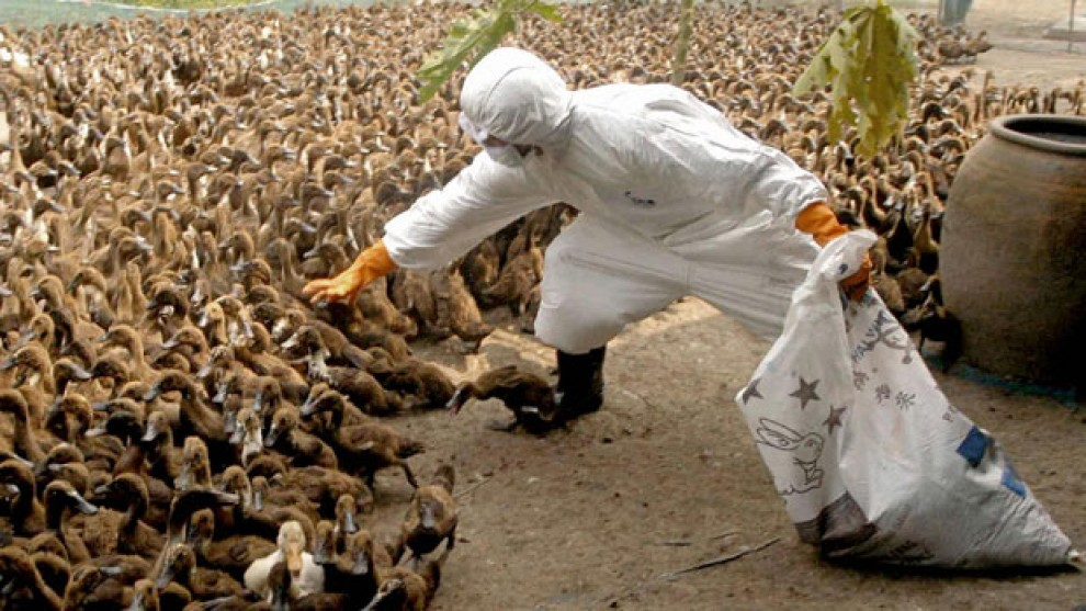 H5N1 Bird FLU also infects humans